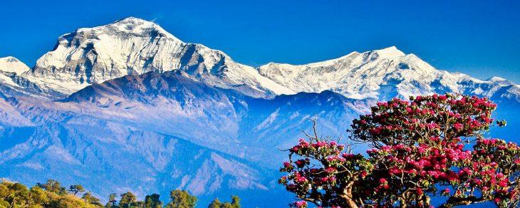 Ghorepani Poon Hill Trek for 8 Days